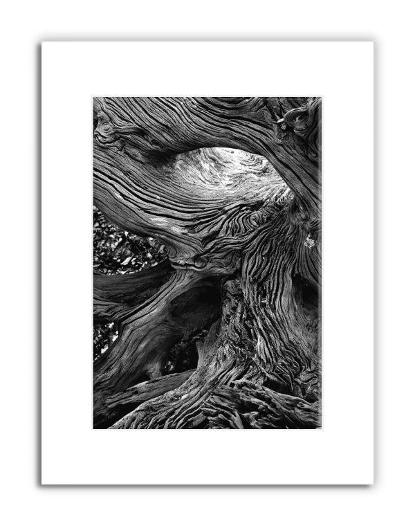 StVincent-Island-Driftwood-matted