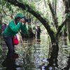 Photo Swamp Walk