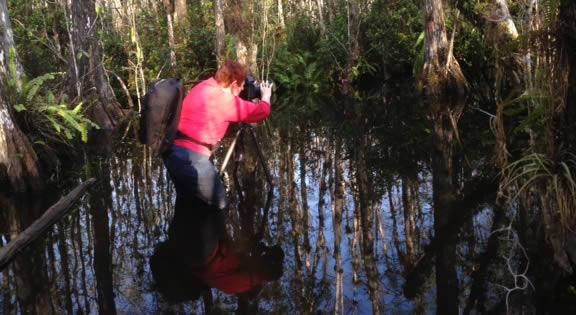 Photo Swamp Walk 3