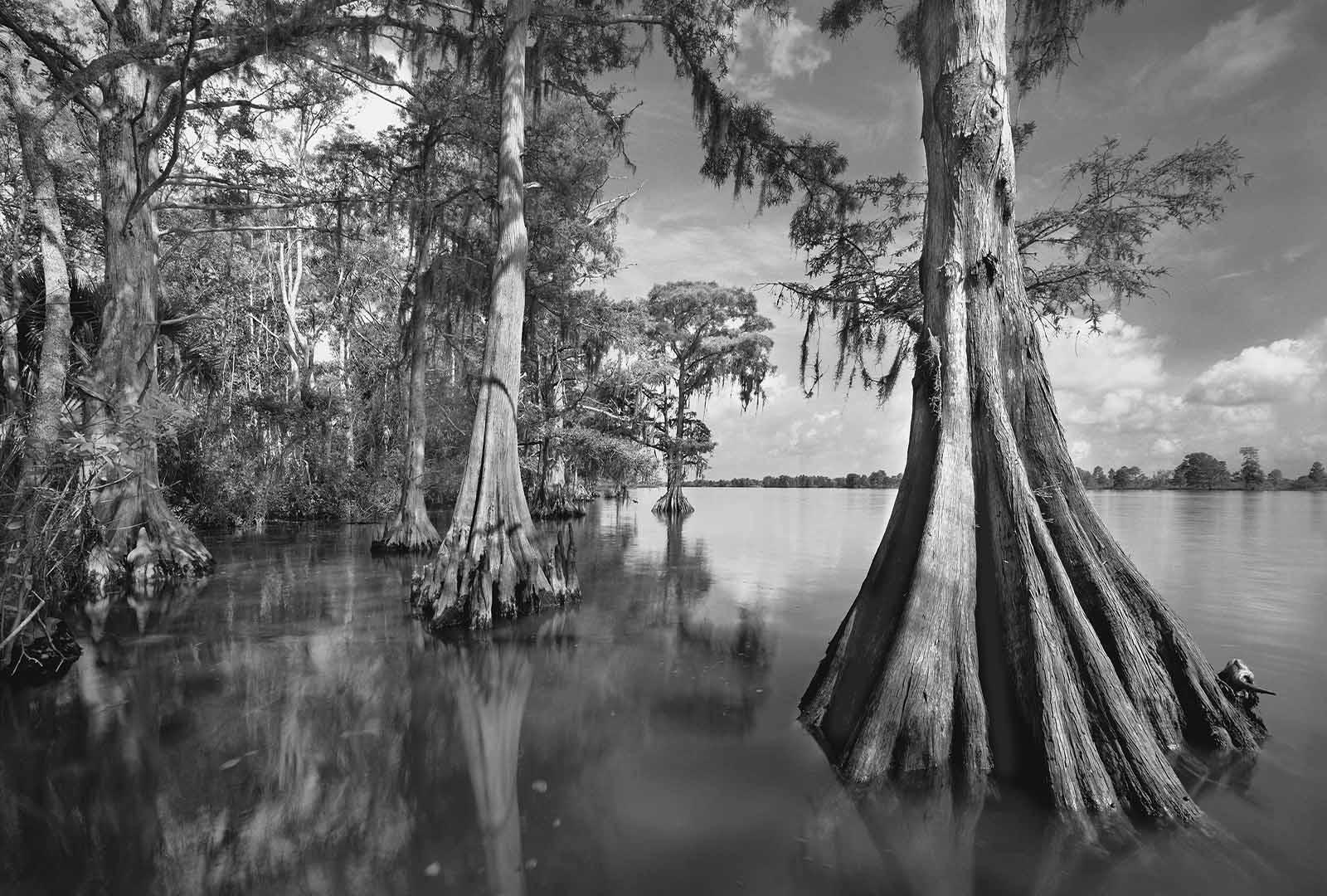 Apalachicola River 1 169 2005 Clyde Butcher Black