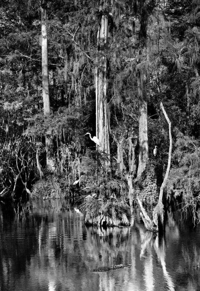 Big Cypress Gallery 14