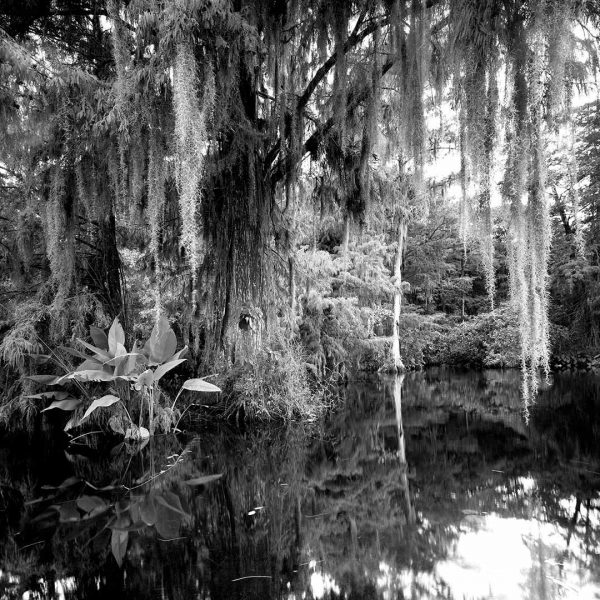 Big Cypress Gallery 2