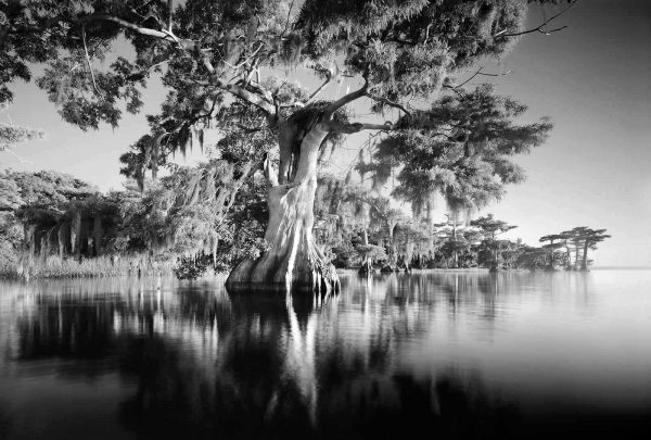 Blue Cypress Lake 5 clyde butcher 7×10