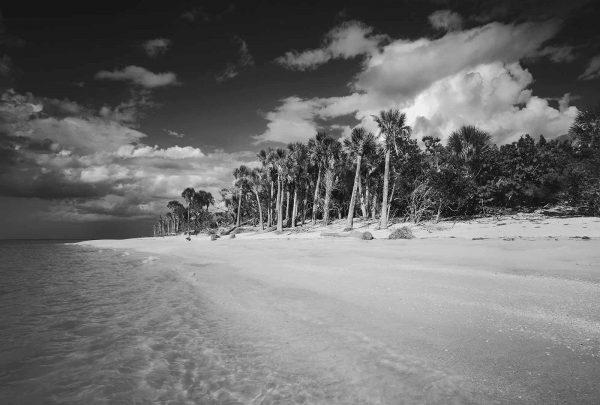 Butcher_C_Cayo_Costa, Island_1