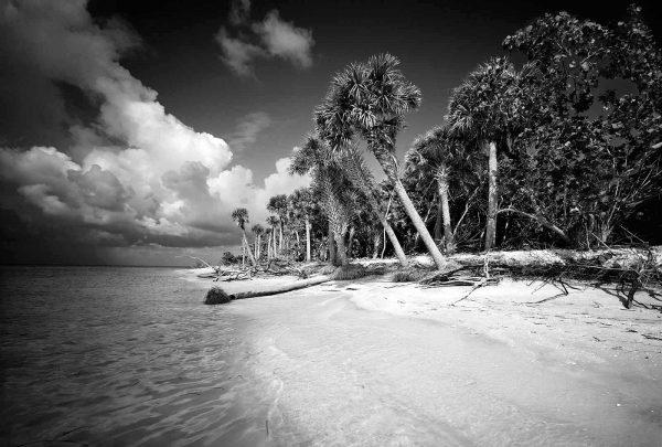 Cayo Costa Island 3