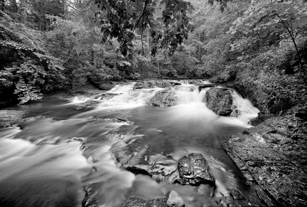 Dingmans Creek 5
