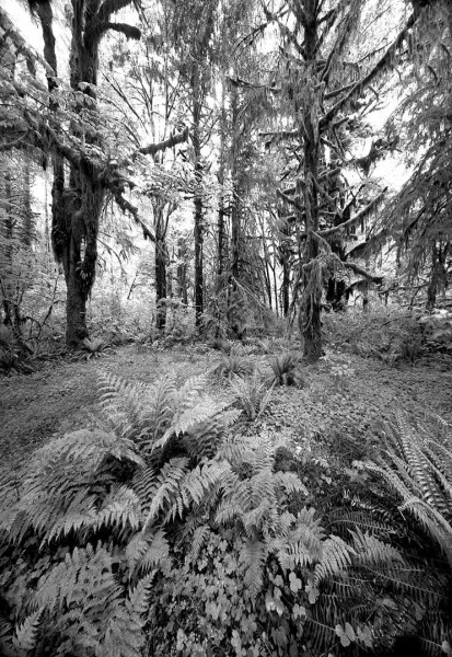 Hoh Rainforest 2