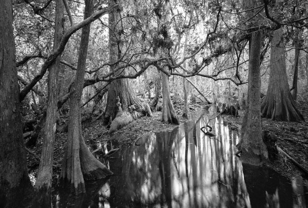 Butcher_C_Loosescrew_Swamp_Sanctuary