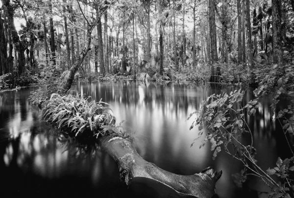 Butcher_C_Loxahatchee_River_1
