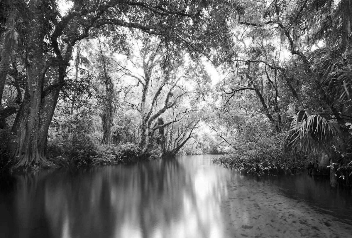 Loxahatchee River 10