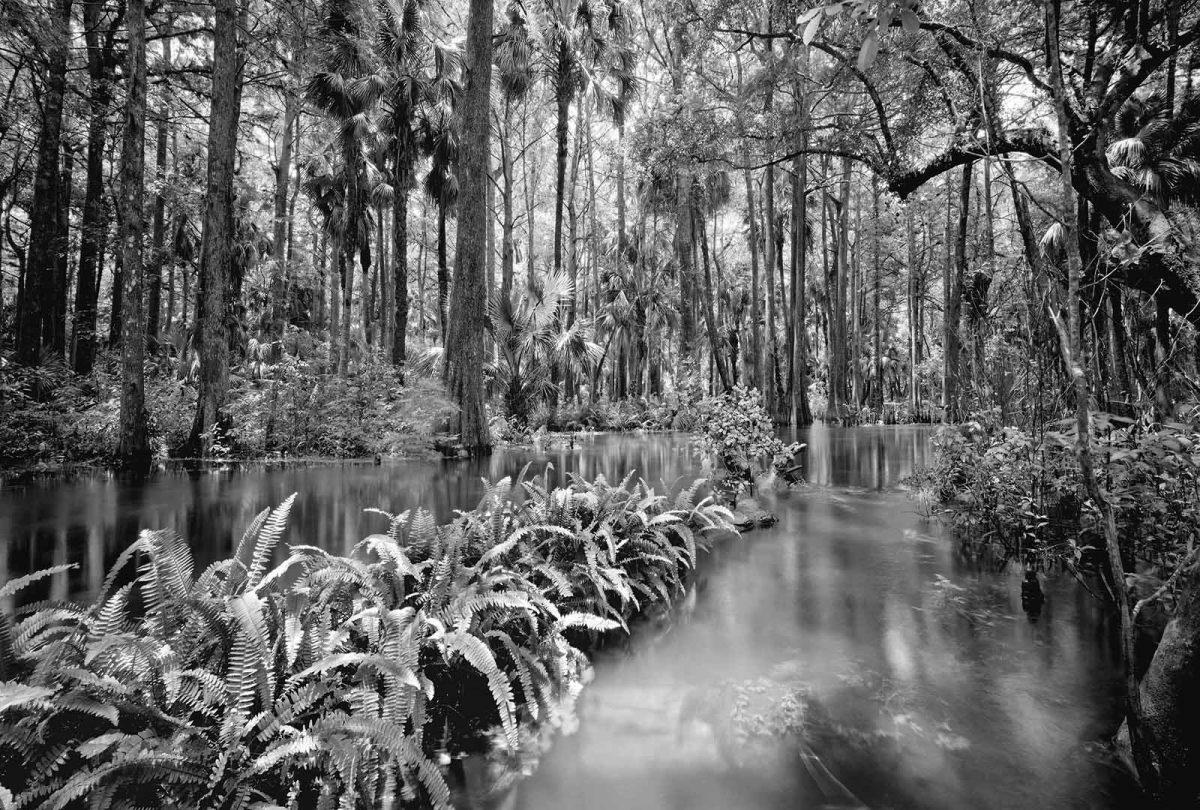 Loxahatchee River 2