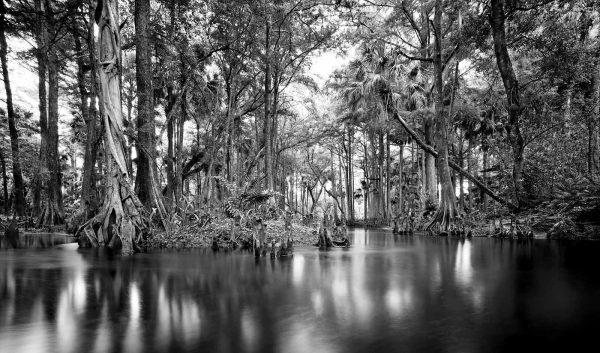 Loxahatchee River 30