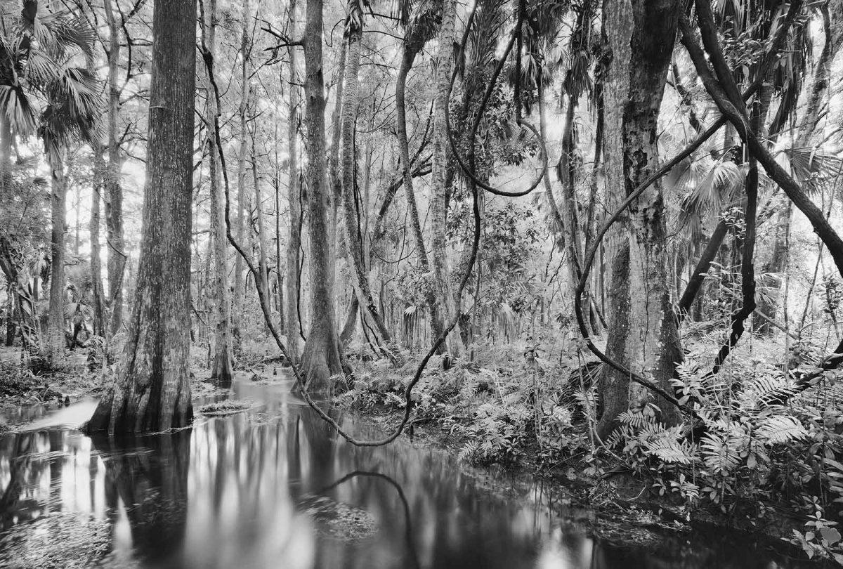 Loxahatchee River 7