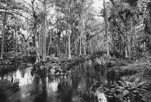 Butcher_C_Loxahatchee_River_9
