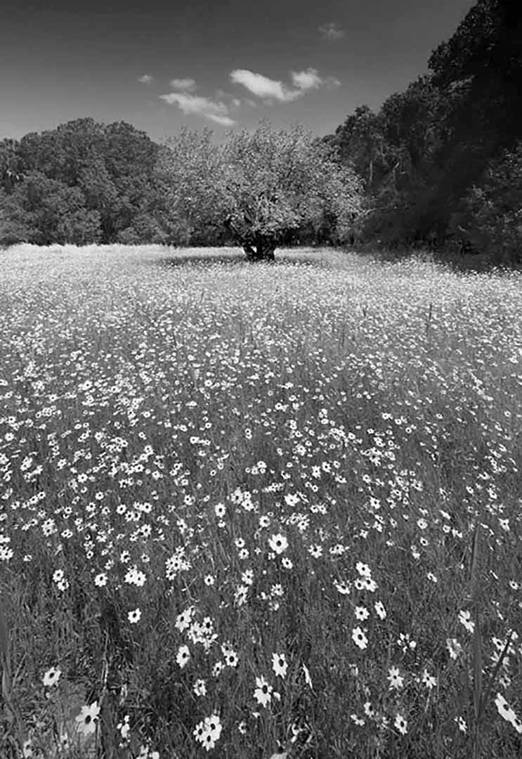 Myakka Flowers
