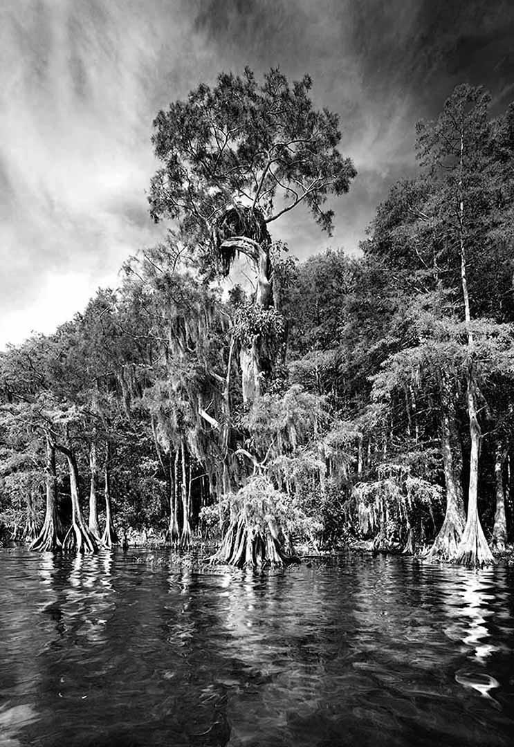Disney Osprey Nest