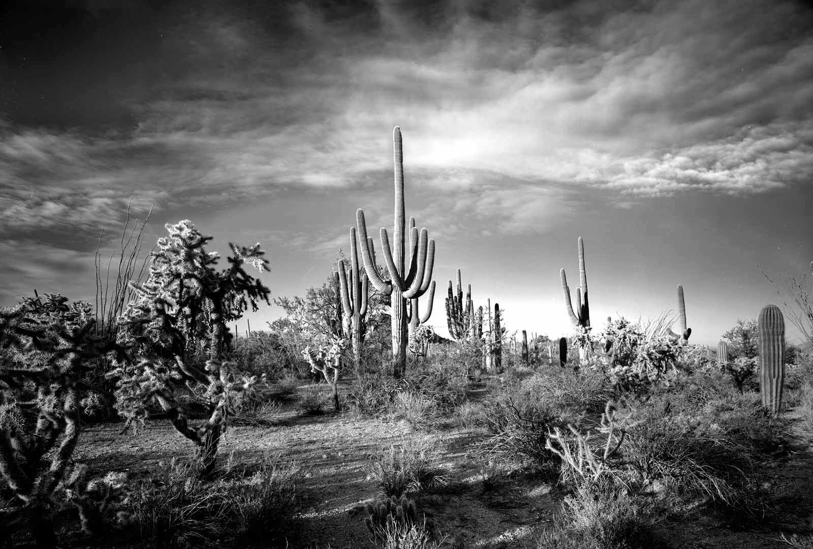 Saguaro National Park Collection