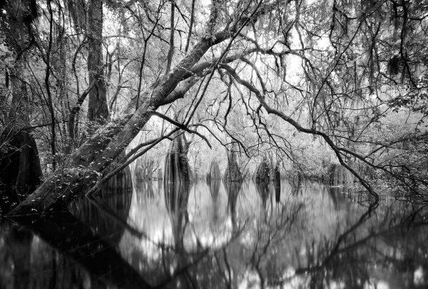 Santa Fe River 27 8×13