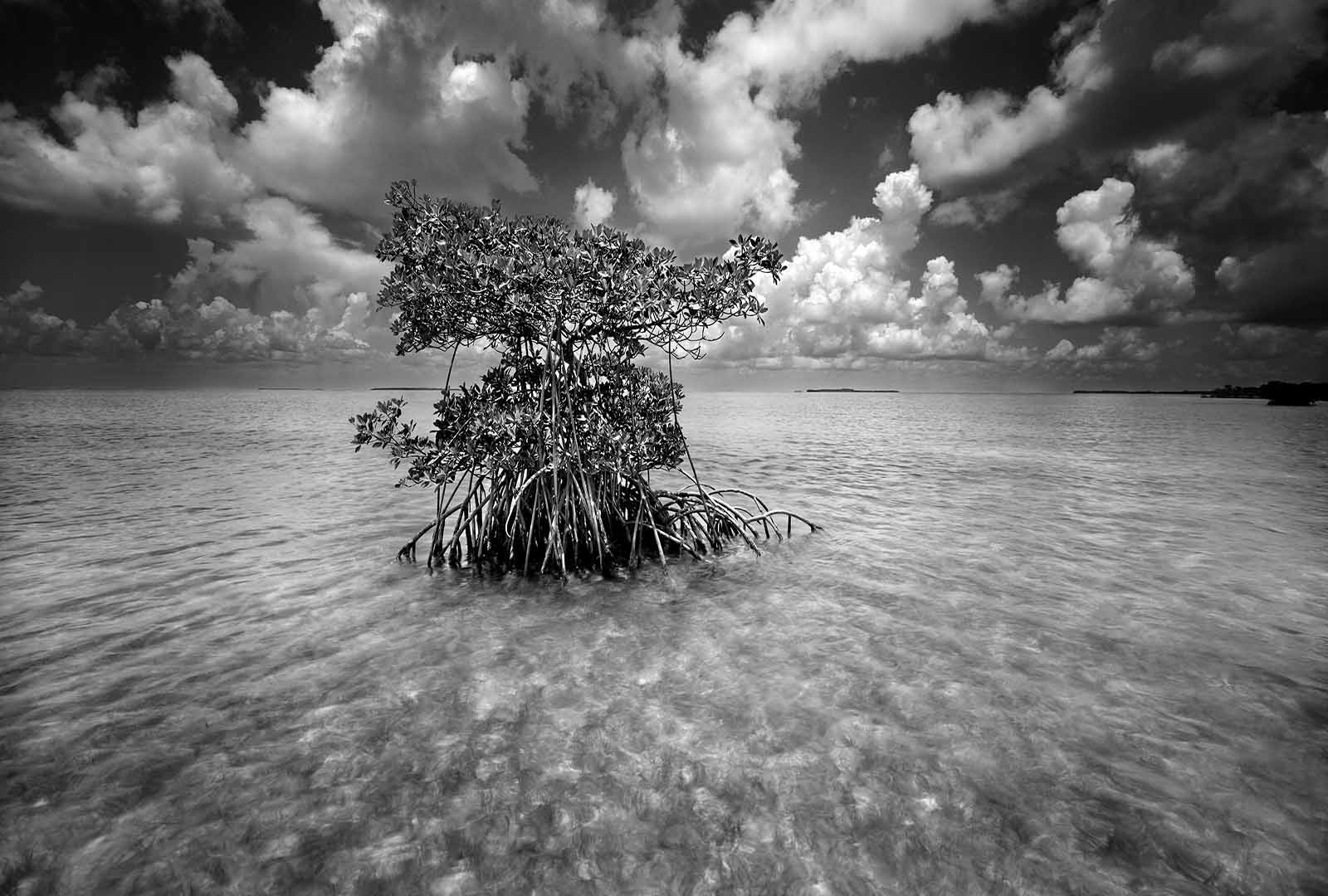 Black And White Photography Everglades