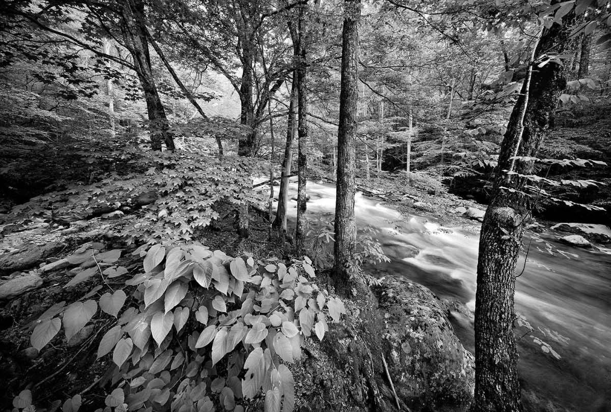 Smoky Mountains 10