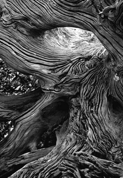 StVincent Island Driftwood 8