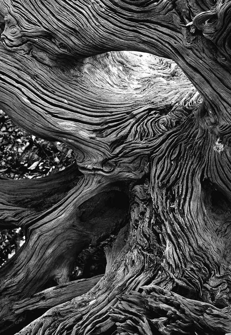 St. Vincent Island Driftwood