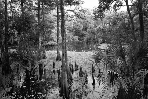 Tom Gaskin Swamp
