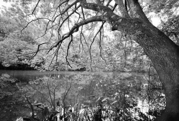 cedar creek 1 22×32