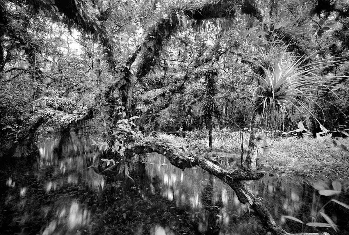 Cigar Orchid Pond