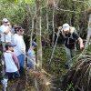 Eco Swamp Walk