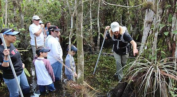 Eco Swamp Walk 4