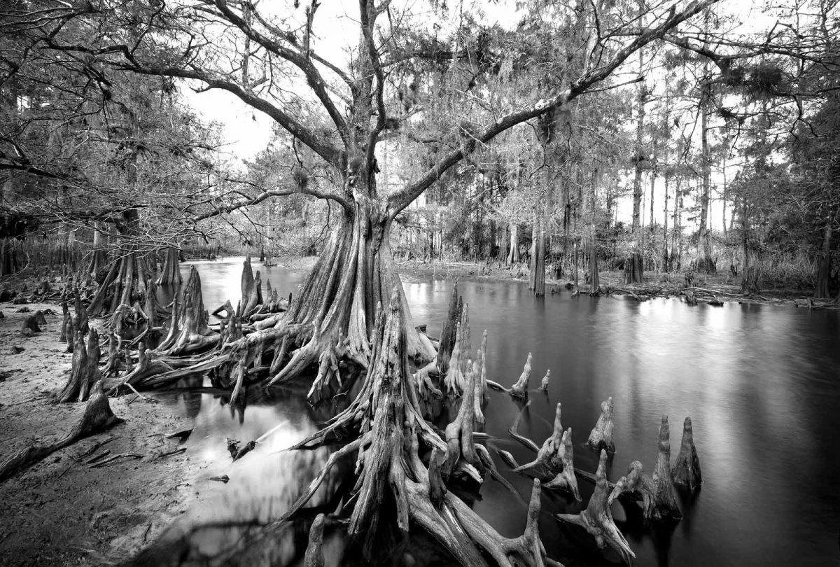 Fisheating Creek 20