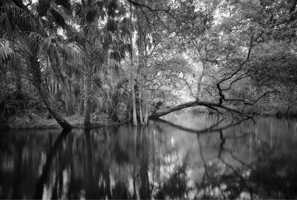 Hillsborough River 2