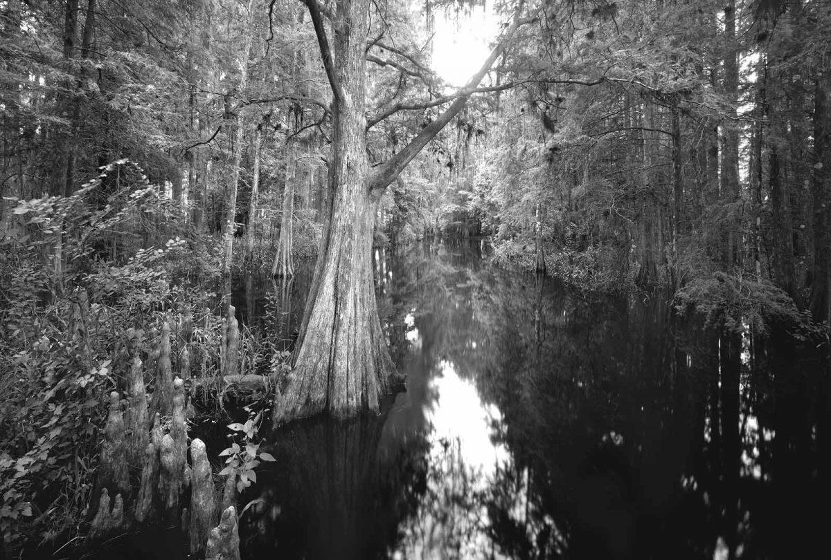 London Creek 2