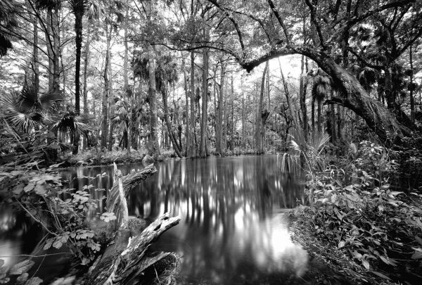 loxahatchee River 6