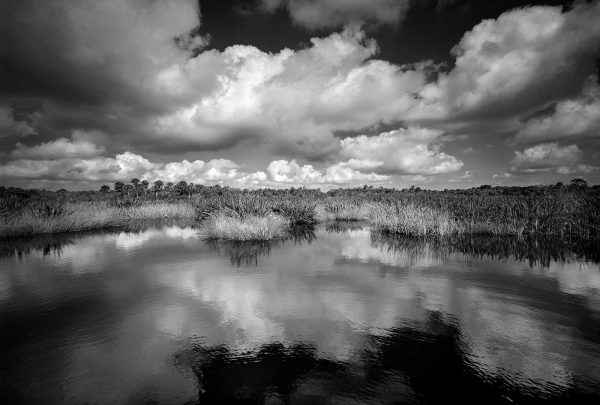 Myakka River 1