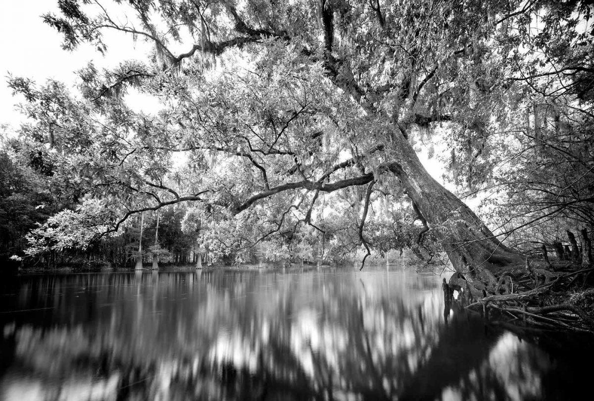 Santa Fe River Oak