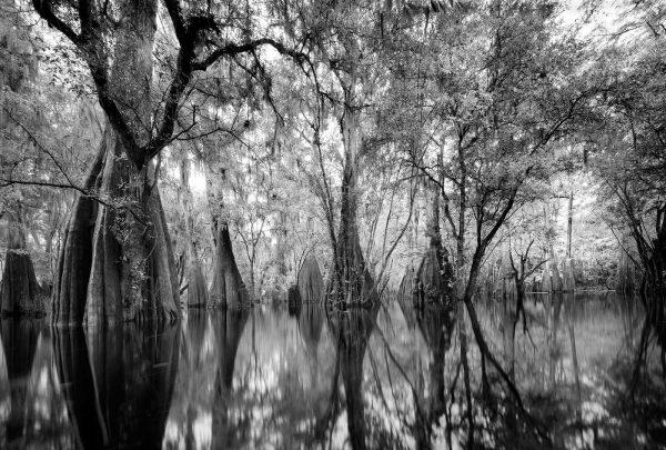 Santa Fe River 26