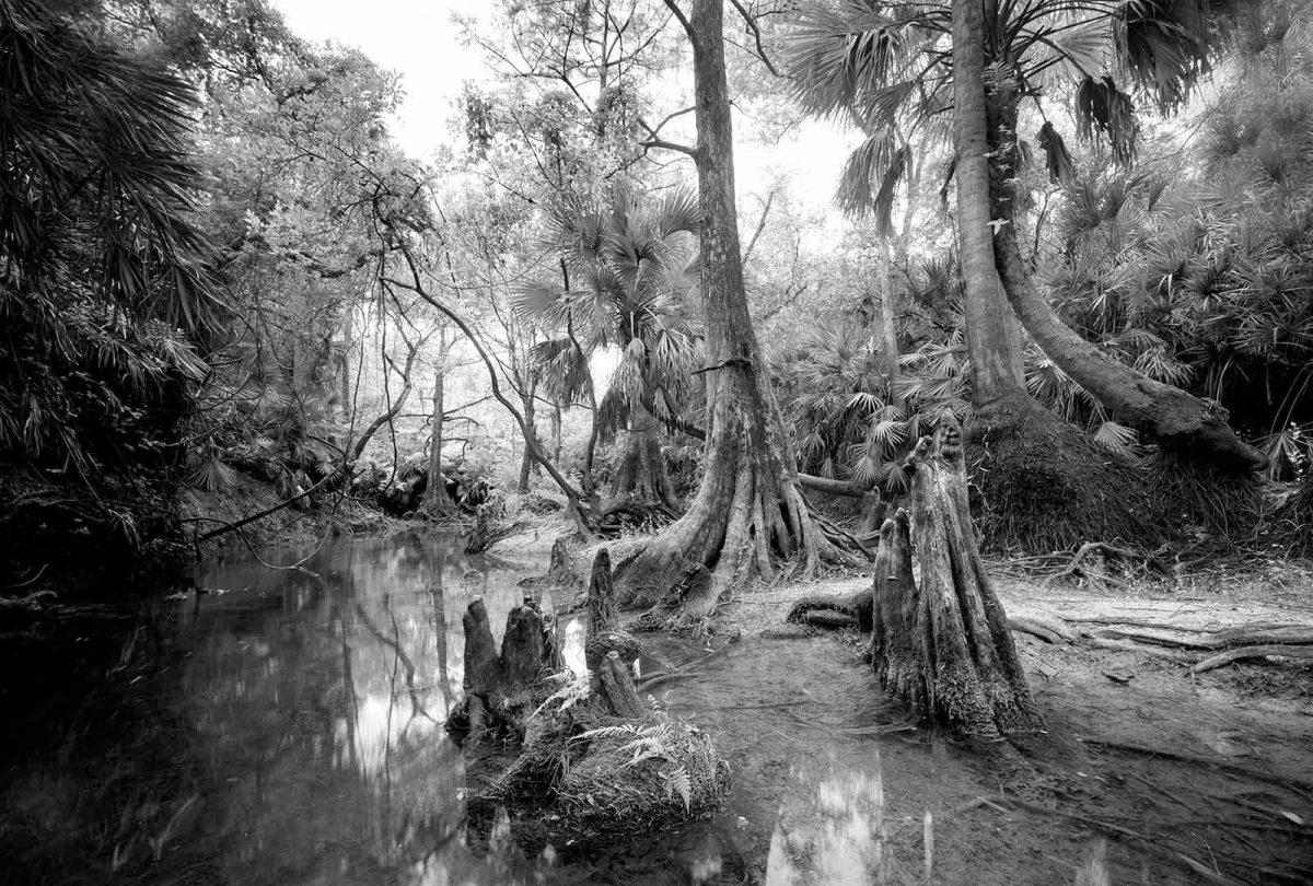 Telegraph Creek 2