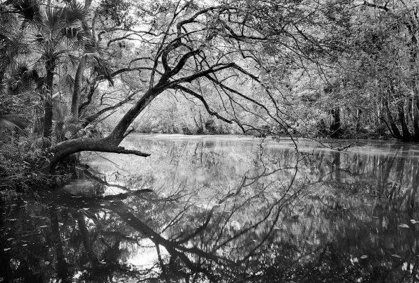 Tupelo Creek