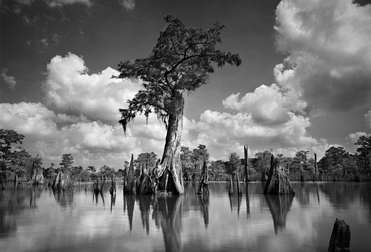 Dead Lakes 19