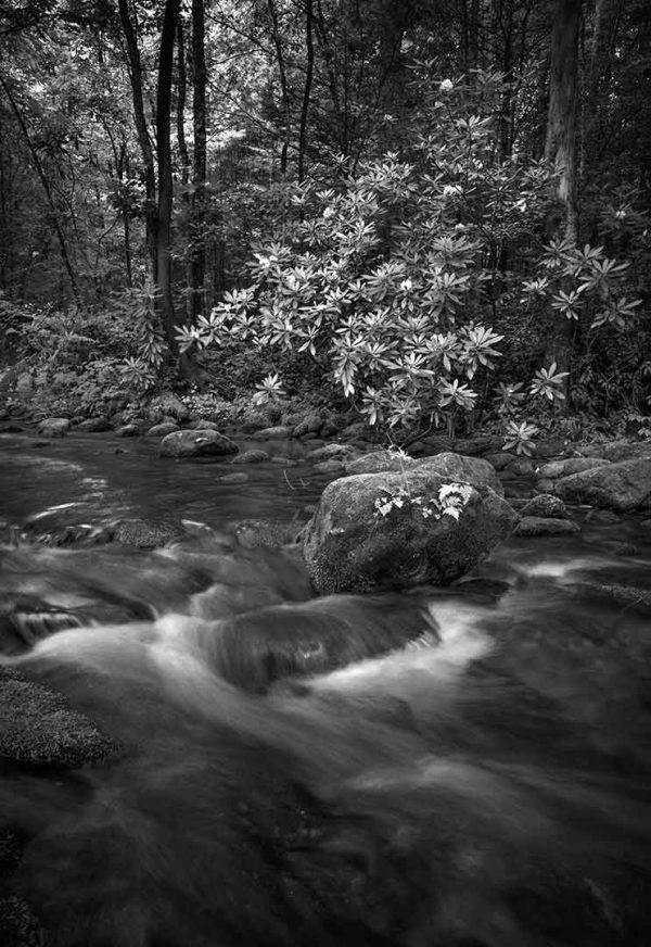 Jacks Creek 3