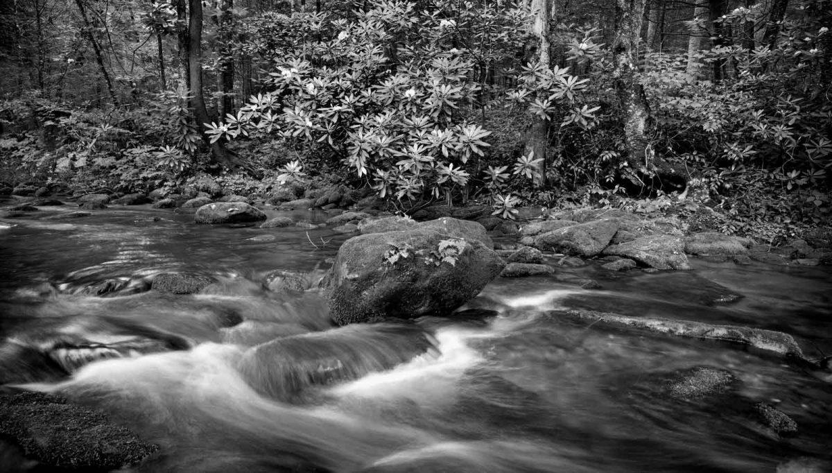 Jacks Creek 1