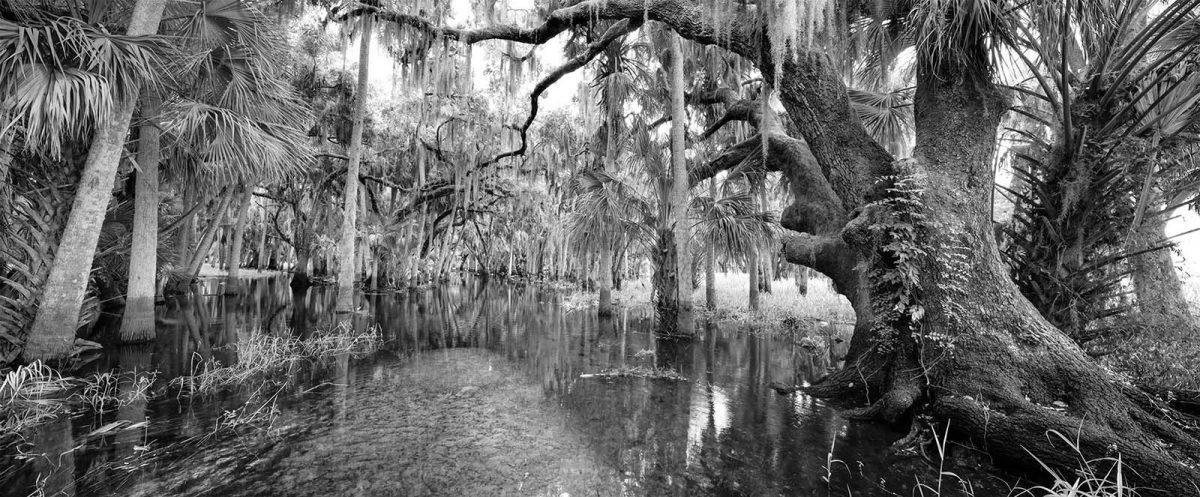 Myakka Swamp