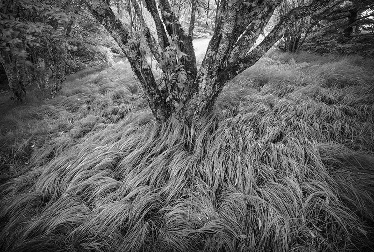Tree Grass Roan Mountain