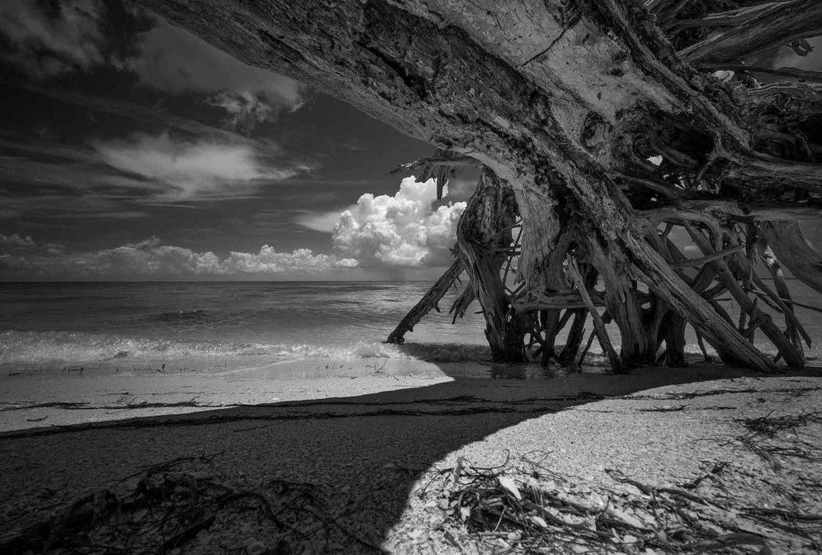 Cayo Costa Driftwood 1
