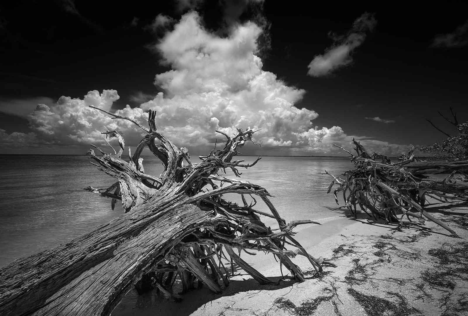 Cayo Costa Driftwood 2 169 2015 Clyde Butcher Black