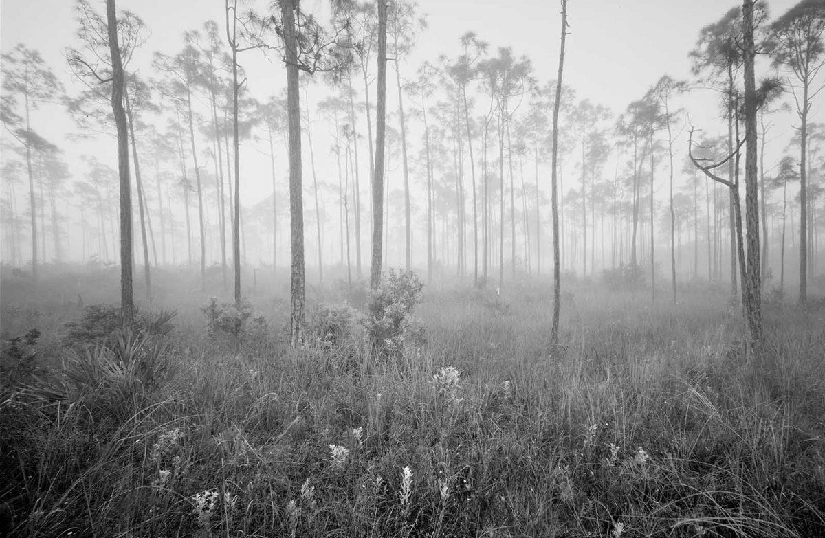 Misty Pines 31a