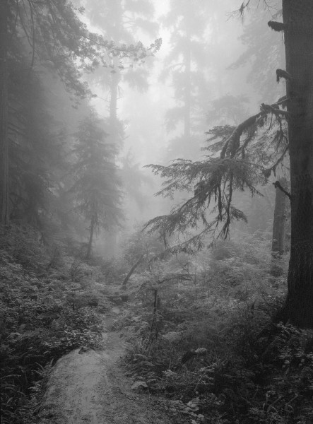foggy forest 1ws