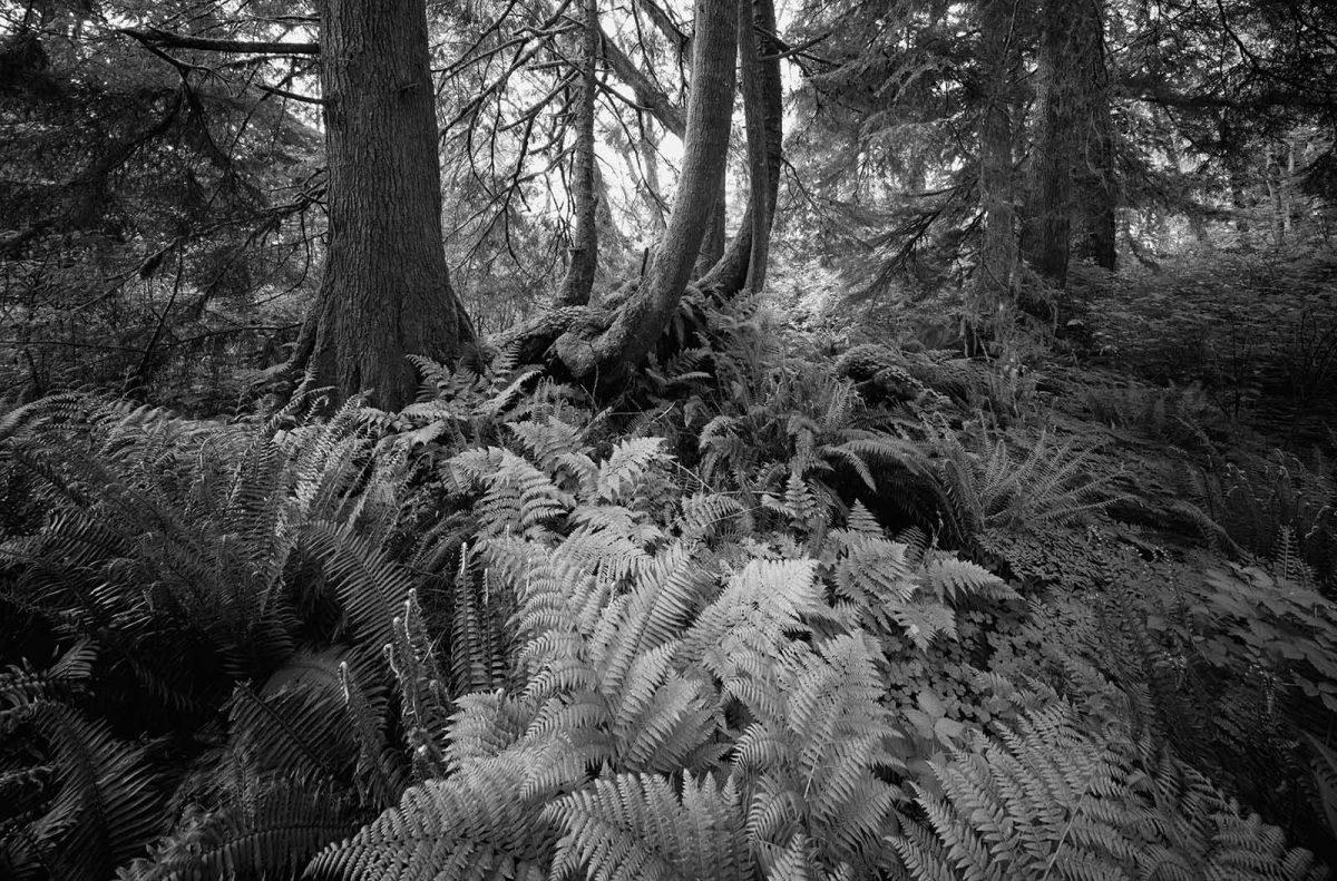 Hoh Rainforest 63